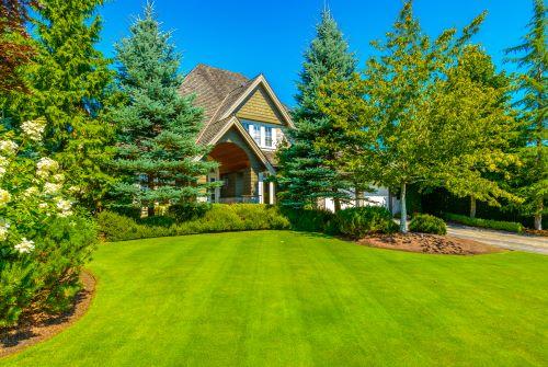 ต้นไม้หน้าบ้าน
