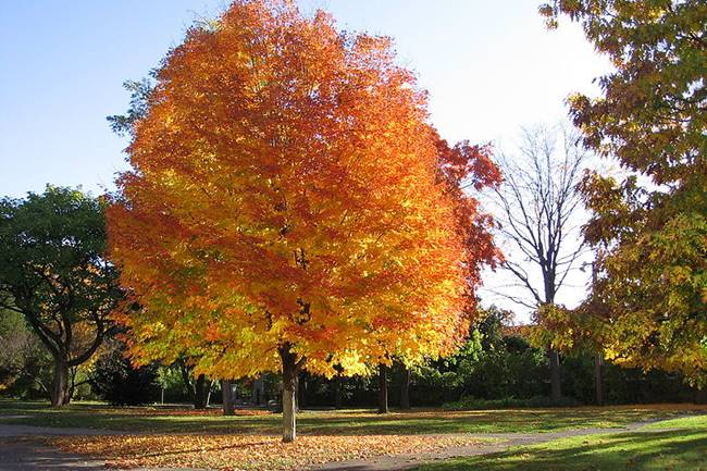 ต้นไม้ประดับ