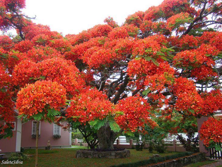 รูปต้นไม้สวยๆ